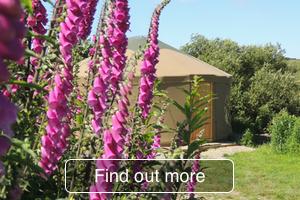 Yurt holidays in Pembrokeshire